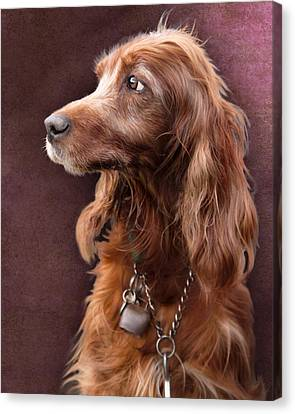 Canvas Print featuring the photograph Red Setter Dog Portrait by Ethiriel  Photography
