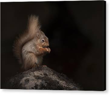 Red Squirrel Portrait Canvas Print