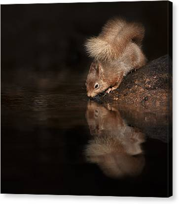 Red Squirrel Reflection Canvas Print