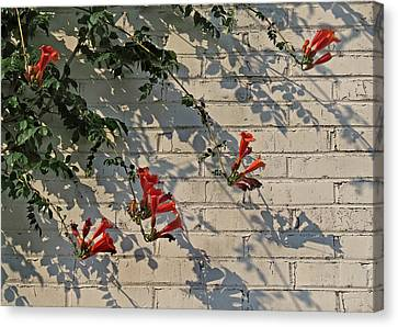 Canvas Print featuring the photograph Red Summer Trumpets by Deborah Smith