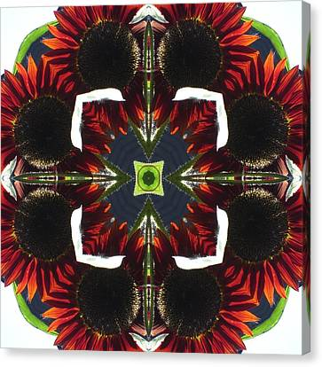 Red Sunflowers With Blue Center Canvas Print