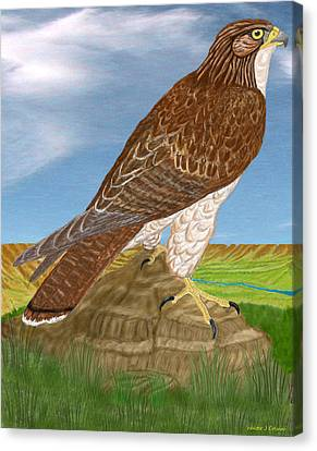 Red Tail Hawk Canvas Print by Walter Colvin