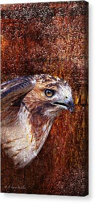 Red-tailed Hawk Canvas Print by J Larry Walker