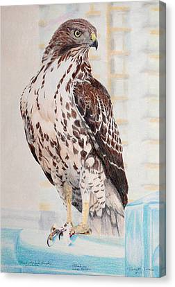 Red-tailed Hawk Canvas Print by Ross Michaels