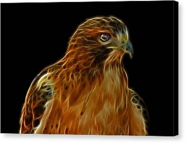 Red-tailed Hawk Canvas Print by Sandy Keeton