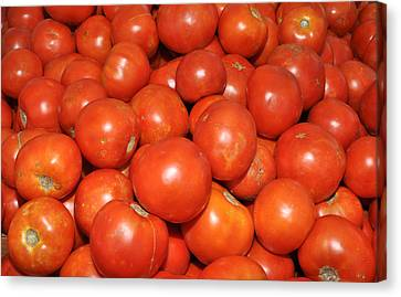 Red Tomatoes Canvas Print by Diane Lent