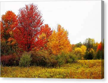 Red Tree Canvas Print by Scott Hovind