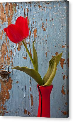 Red Tulip Bending Canvas Print by Garry Gay