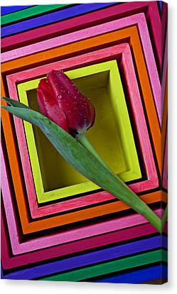 Red Tulip In Box Canvas Print by Garry Gay