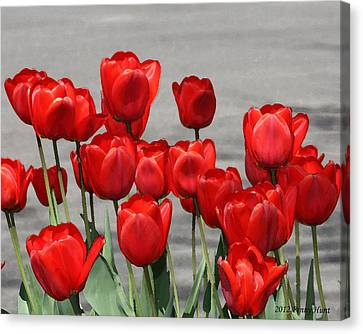 Canvas Print featuring the photograph Red Tulips Welcome Spring by Penny Hunt