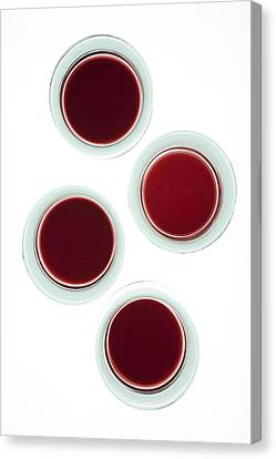 Red Wine Glasses Canvas Print by Frank Tschakert