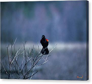 Canvas Print featuring the photograph Red-wings Morning Call 10o by Gerry Gantt
