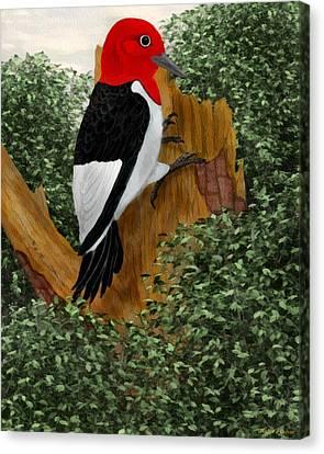 Redhead Woodpecker Canvas Print by Walter Colvin