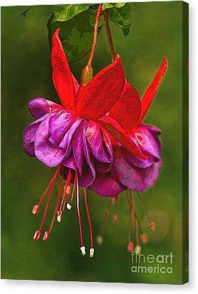 Redpurple Flower Canvas Print