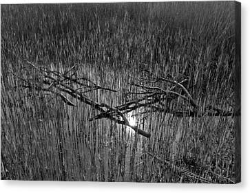 Reeds And Tree Branches Canvas Print by David Pyatt