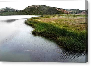 Reeds On The Water Canvas Print