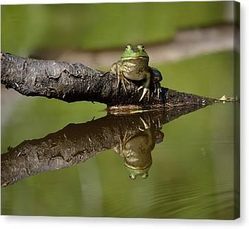 Reflecktafrog Canvas Print