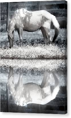 Canvas Print featuring the digital art Reflecting Dreams by Mary Almond