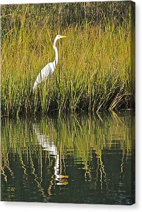 Reflecting Canvas Print by Eve Spring