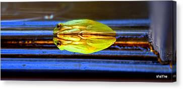 Reflecting Frog Canvas Print