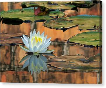 Canvas Print featuring the photograph Reflecting Pond by Deborah Smith