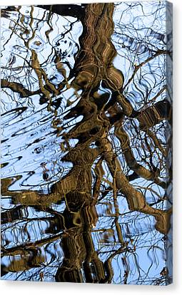 David Lester Canvas Print - Reflection by David Lester