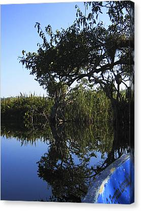 Canvas Print featuring the photograph Reflection Of Arched Branches by Anne Mott