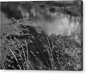 Reflections In The Pond Canvas Print by Kathleen Grace