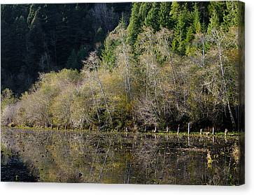 Reflections On Marshall Pond Canvas Print by Greg Nyquist
