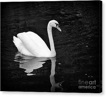 Reflective Beauty Canvas Print