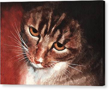 Reflective Kitty Canvas Print by Tricia Griffith