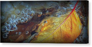 Refreshed.. Canvas Print by Al  Swasey