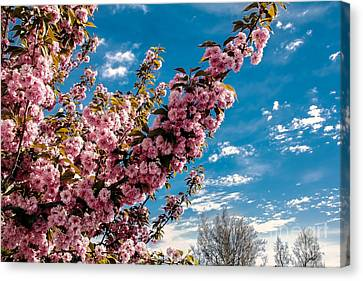 Refreshing Canvas Print by Robert Bales