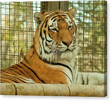 Regal Pose Canvas Print