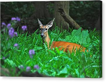 Relaxing In The Morning Canvas Print by Michael Peychich