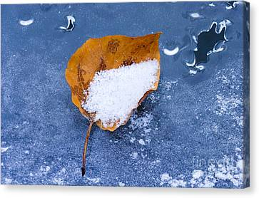 Remnants Of Autumn Canvas Print by Mike  Dawson