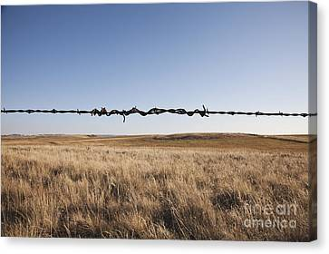 Repaired Strand Of Barbed Wire Canvas Print by Jetta Productions, Inc