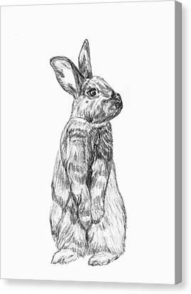 Canvas Print featuring the drawing Rescued Rabbit by Katherine Dohnalek