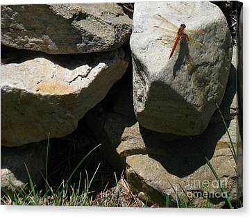 Canvas Print featuring the photograph Resting Dragonfly  by Nancy Patterson