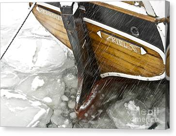 Resting In Ice Canvas Print by Heiko Koehrer-Wagner