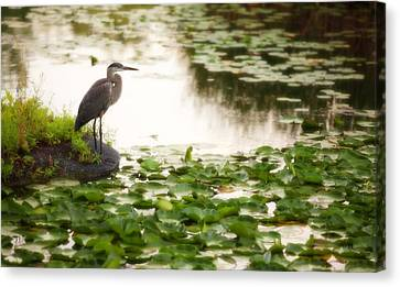 Canvas Print featuring the photograph Resting My Wings by Anthony Rego