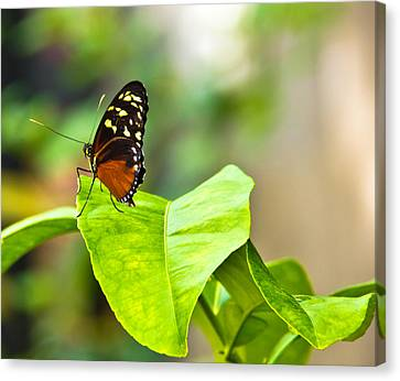 Resting On A Petal Canvas Print
