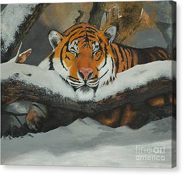 Resting Tiger Canvas Print by Thomas Luca