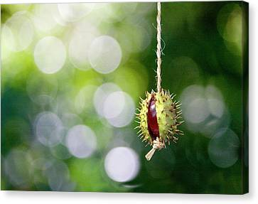 Canvas Print featuring the photograph Retro Conker  by Richard Piper