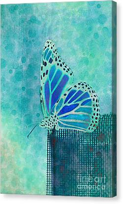 Reve De Papillon - S02a2 Canvas Print by Variance Collections