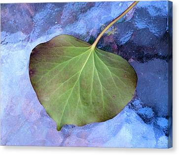 Reverse Ivy On Blue Canvas Print by Beth Akerman
