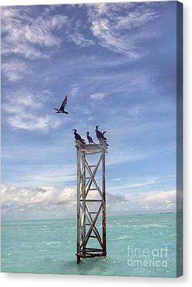 Revised Image Of Birds On Wooden Stand In The Ocean Off Key West Canvas Print by Christopher Purcell