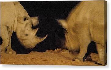 Rhino Clash Canvas Print