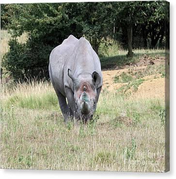 Rhinocerous 13 Canvas Print by Ruth Hallam