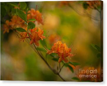 Rhododendron Impressions Canvas Print by Mike Reid